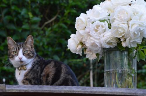 Flowery Cat